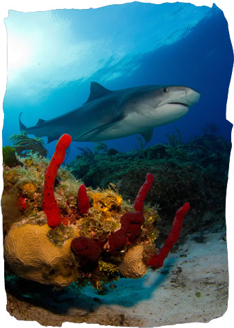 Diving the Bahamas Islands