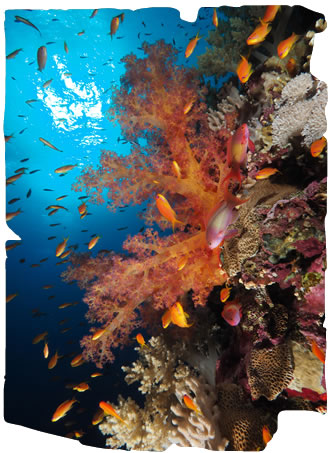 Red Sea Diving, Egypt