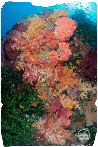 Diving Raja Ampat, Indonesia