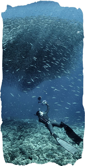 Sardines_Moalboal_(Copyrigth-Yichen_Zhuang)(Philippines).jpg