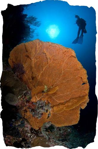 Diving the Philippines
