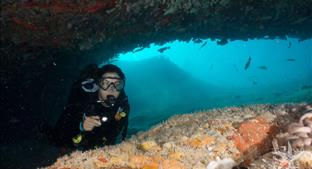 Walls of Zapata, Bay of Pigs - New Cuba Travel Program with Jardines Aggressor I