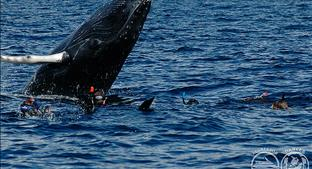 Turks and Caicos Aggressor II - Silver Bank - Snorkel with Humpback Whales